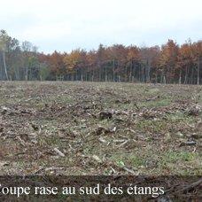 La destruction massive de notre forêt