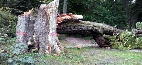 La mort d'un arbre